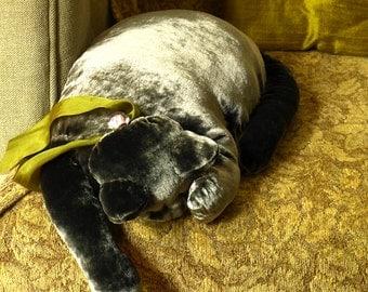 A Charcoal Grey Velvet Cat
