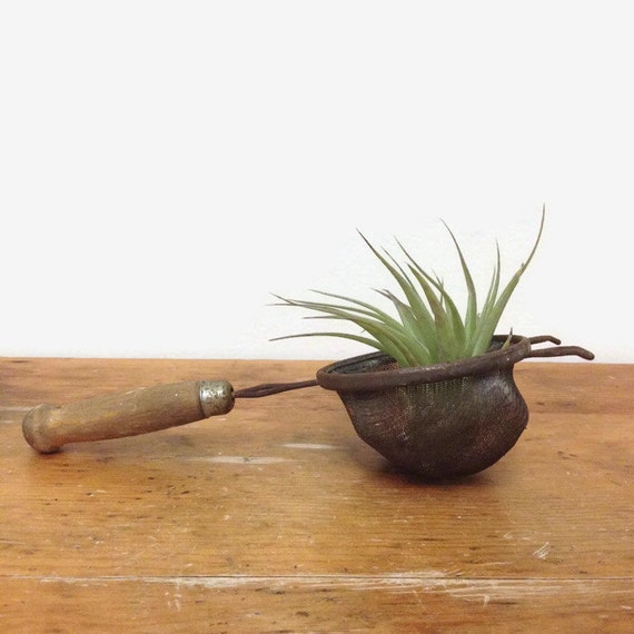 Vintage Small Strainer - Rusty Patina - Rustic Primitive Decor - Mini Planter for Air Plant