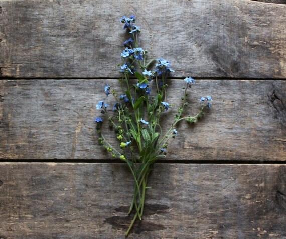 Chinese Forget Me Nots, organic flower seeds, heirloom seeds from our farm, flower garden, organic gardening, cottage garden, flowers