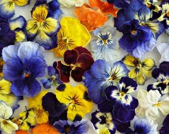 Violas, Real Dried Flowers, Wedding Confetti, Decoration, Table Decor, Centerpiece, Flower Girl, Viola, Craft Supplies, 200 Dried Violas