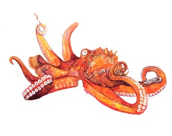 minimalist watercolor print: Pacific Octopus