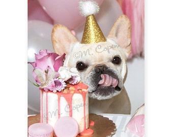 Happy Birthday French Bulldog Cards - Set of 4 Cards - Fawn French Bulldog, Creme French Bulldog, Happy Birthday Fawn French Bulldog