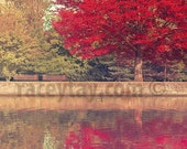 Red Maple Tree Print, Rideau Canal Ottawa Nature Photography, Fall Olive Burgundy Wall Decor in Autumn