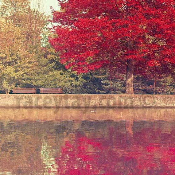 Red Tree Print, Rideau Canal, Ottawa, Canada, Nature Photography, Fall Tree, Olive Green, Burgundy