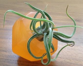 Tillandsia gems 'mandarin' color; translucent resin air plant holder, geometric, crystal plant holder, great gift idea