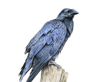 Raven Crow Bird - Limited Edition Giclee print from an Original painting by Gayle Mason