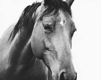 Black and White Horse Photography | Modern Horse with White Background