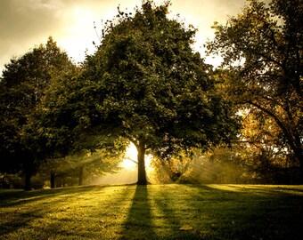Tree Photography , Misty Tree Photography, Tree Photograph, Fall Tree Photograph, Autumn, Trees , Fantasy
