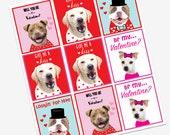 Dog Valentine Card, Valentine's Day, shelter dog, adopt, valentines, love, printable valentines day card, instant download, valentines card