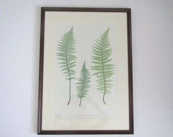 Vintage botanical print/The Ferns of Great Britain and Ireland/Thomas Moore/Bradbury & Evans nature print