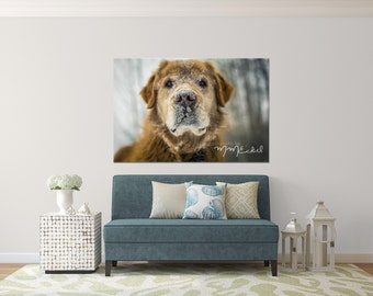 Photographic Wall Art - Snowy Dog - Aluminum Metal print ready to hang