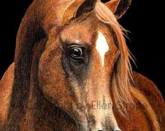 Horse Prints- 'Arabian Portrait' Giclee Print