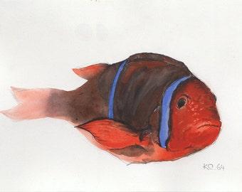 Clown fish with attitude