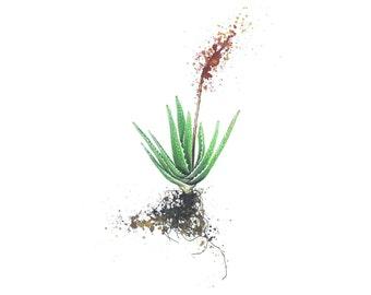 Aloe bloom print on canvas