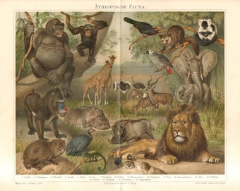 1892 African Fauna - Gorilla, Chimpanzee, Mandrill, Giraffe, Lion, Hippopotamus, Elephant, Ostrich, Chameleon, Rock Hyrax Antique Lithograph