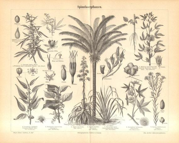 1897 Fiber Crop Plants, Cannabis Sativa, Green Ramie, American Aloe, Piassava Palm, New Zealand Flax, Levant Cotton, Linseed Antique Print