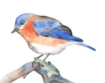 Blue bird print, bluebird watercolor, bluebird print, 5 by 7 size smallest print, Wildlife wall art, Bluebird painting BB6416