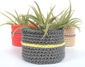Large Air Plant in Hand Crafted Cotton Bowl
