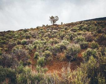 "Fine Art Photography, Landscape, Oregon, ""Approaching Storm"""