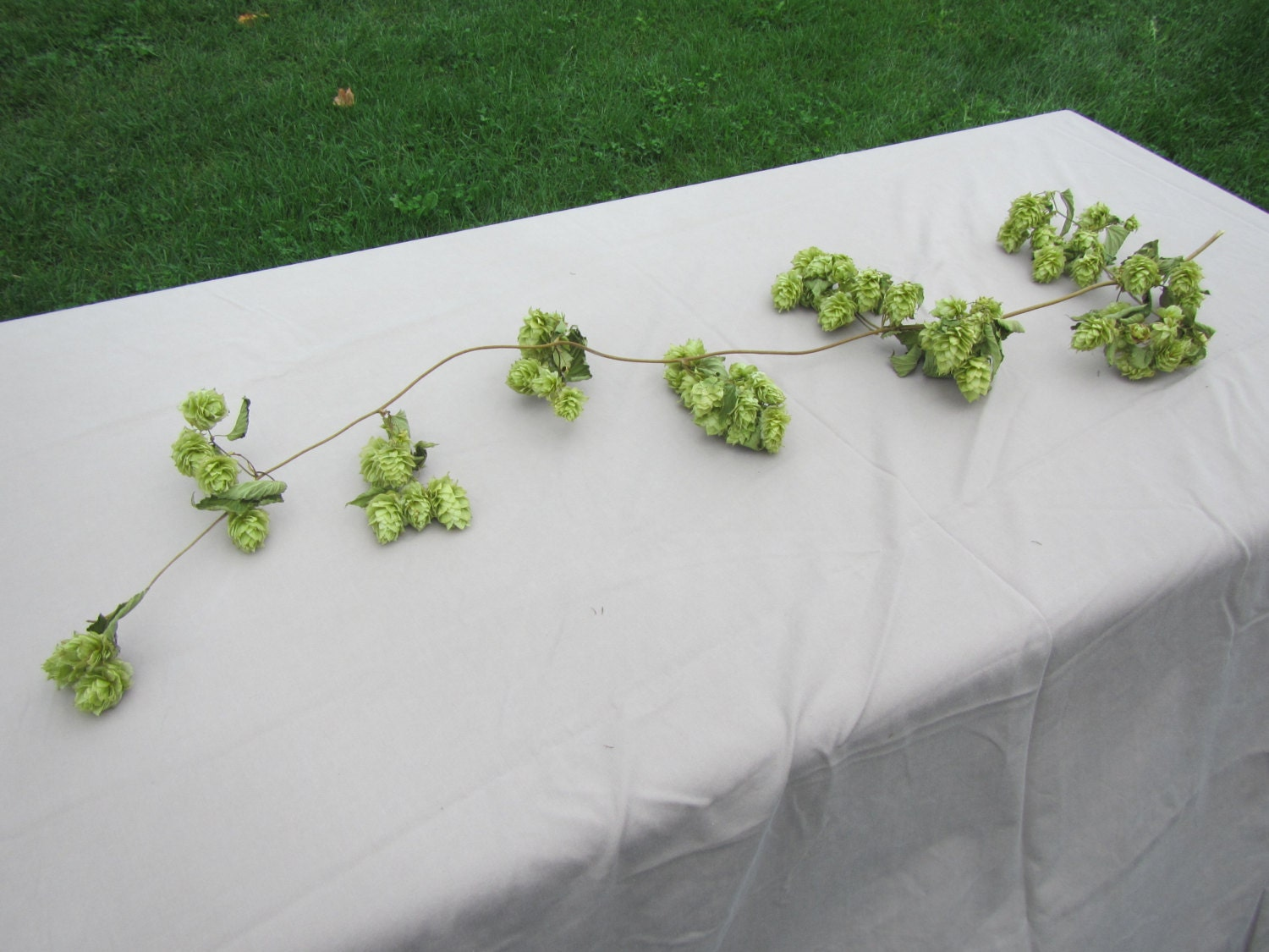 Natural hops vine 3 ft long dried hops garland wedding for Artificial hops decoration
