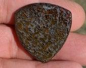 Dinosaur bone Guitar Pick -  Large Prehistoric Fossil Plectrum D-16-29
