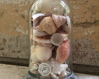 Vintage Retro Industrial Glass Light Dome Cover with Seashells Display Cloche Mid-Century