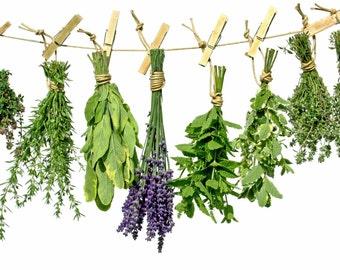 Herb of the Month Club Membership - Corrspondences, Herbal Item, & More! 12 Months