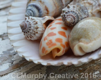 Sea Shells Photography Beach Photography Sea Shells Still Life Bathroom Print 8 x 8 Print