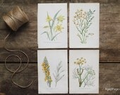 Vintage Flower Prints, Set of 4, 20% off, Botanical Wall Art, Rustic Decor, Farmhouse Chic, Yellow & Green