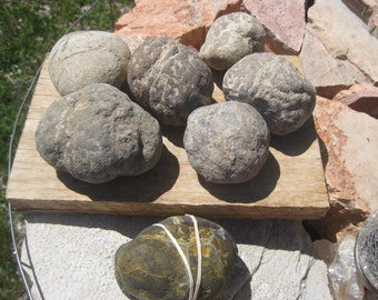 7 Whole Dugway Geodes - Lapidary rough geodes -  7 complete agate geodes