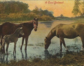 A Cool Retreat - Antique 1900s Tinted Photographic River Horses Postcard