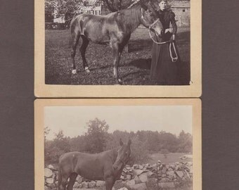 Pair of Mounted Images of Horses
