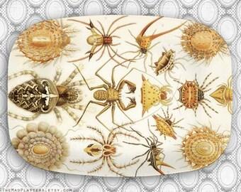 Haeckel arachnids platter