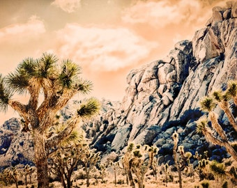 Old West, Joshua Tree California. Desert Landscape. National Park Images. Mohave Desert. Southwest. Fine Art Photography by Liz and Rich.