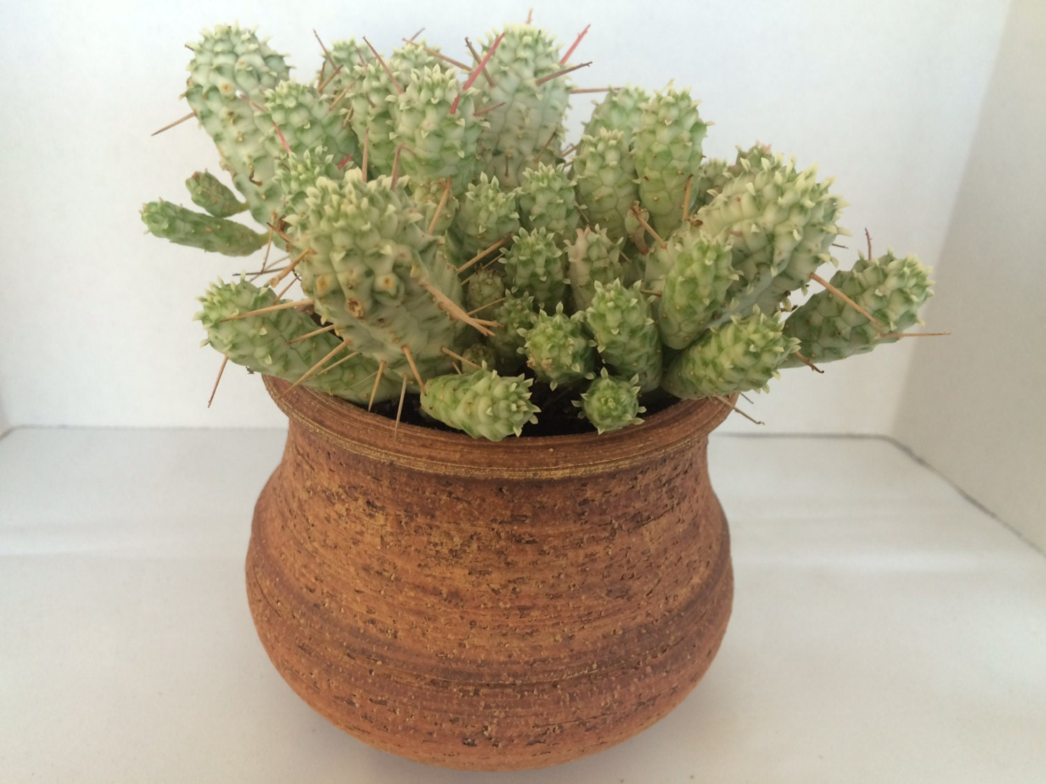 Succulent Plant DIY Dish Garden Complete with Hand Thrown