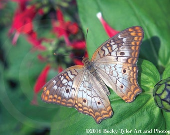 Butterfly Photography Fine Art  Photo Print
