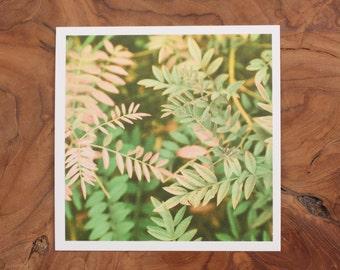 """35mm film print   flora   5x5"""""""