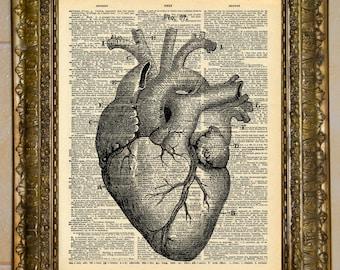 Heart Anatomy Diagram Black and White Dictionary Art