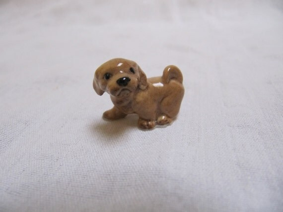 pin mini lhasa apso - photo #42