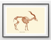 Antelope Skeleton  Digital Print /Antique Illustration / Home Decor / wall Art