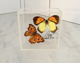 Lucite Butterfly Box , Botanical Specimen , Butterfly Decor , Orange Yellow