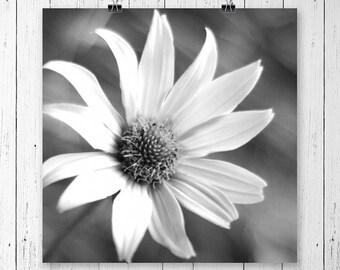 Daisy Print Black and White Flower Print Daisy Art Print Flower Art Home Decor Nature Photography Flower Photography Daisy Wall Art Fine Art