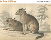 SALE Antique Original Hand Colored Steel Engraved 1843 Book Plate Print Jardine Naturalist Library Mammalia Canine Dog of American Indians #