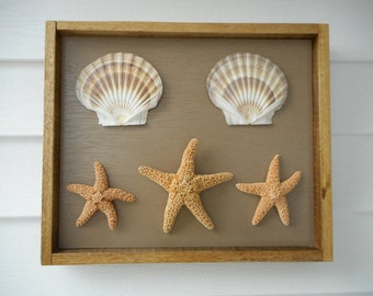 25% OFF SALE - Large framed sea shell shadow box / beach decor / nautical decor