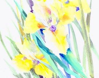 Yellow Irises, 14 X 11 in, original floral watercolor painting