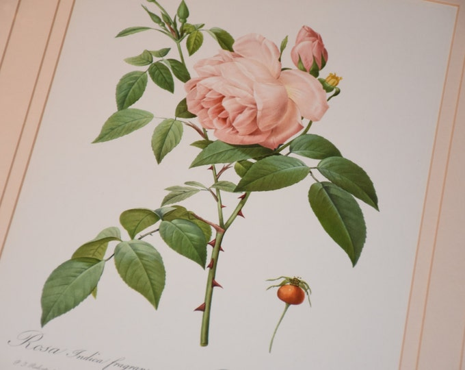 Featured listing image: LARGE Pair Pierre-Joseph Redoute Vintage 23x19 Framed Roses Quality Prints  The greatest botanical illustrator of all time | Triple Matted