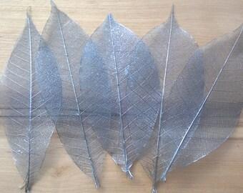 Silver rubber tree leaf skeletons, set of 10 silver skeleton leaves