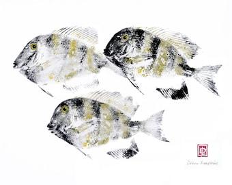 5x7or 8x10 Hawaiian Manini Tang Reef Fish Print Gyotaku in Black Mat