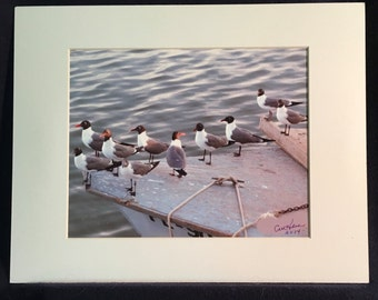 Sea birds photograph,  seagulls, in Carrabelle, Florida, summer, ocean, gulf.