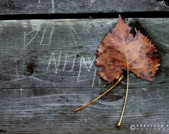 Fine Art Print, Maple Leaf, Rustic Decor, Fall Photography, Grey, Orange.